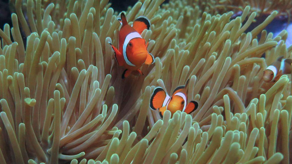 immersioni thailandia phi phi island